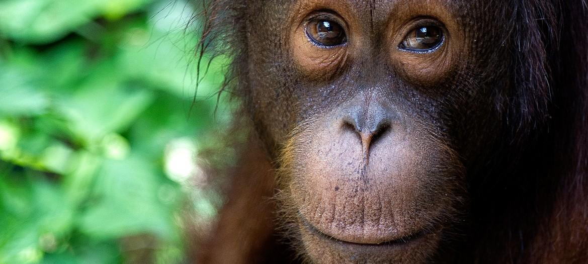 Malesia/Borneo